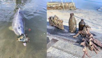 Golfinho traz presentes das profundezas aos pescadores para receber comida em troca