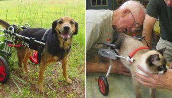 Veterinário aposentado de 92 anos dedica sua vida a fazer cadeiras de rodas para animais deficientes