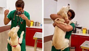 Veterinário tem uma maneira fofa de vacinar cães sem que eles percebam