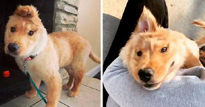 """Este cachorro """"unicórnio"""" tem uma orelha no topo da cabeça e é uma fofura"""