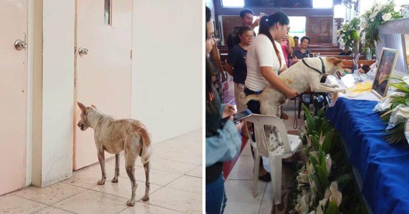 Cachorro esperou durante dias o seu amigo professor falecido do lado de fora da sala de aula