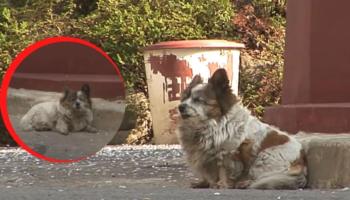 Cadelinha ainda espera por seus donos no mesmo lugar depois de 10 anos