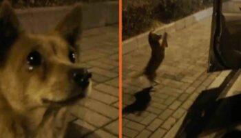 Cachorrinho perdido chora ao receber comida de uma estranha