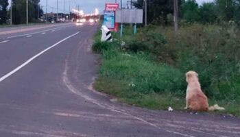 Cachorro se perdeu em uma caminhada há 4 anos e espera por sua família na estrada desde então
