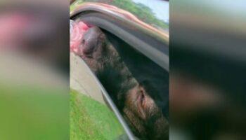 Homem vê cachorrinho preso em um carro quente e infringe a lei para salvá-lo