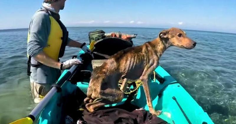 Fotógrafo encontra um cachorrinho abandonado em uma ilha deserta e o resgata