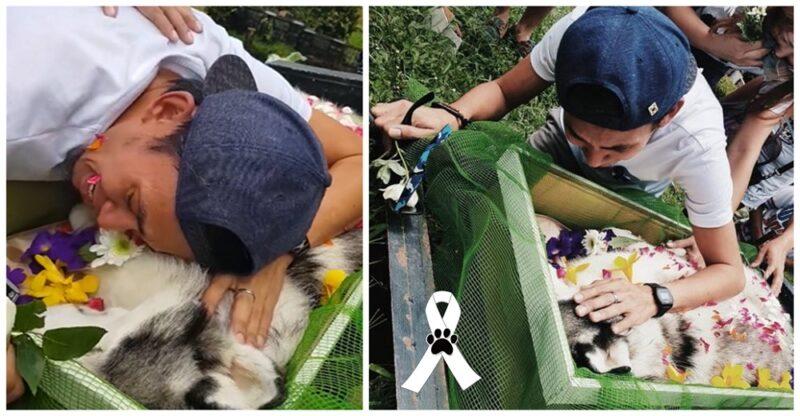 Devastado, jovem que comoveu milhões se despede de seu cachorro após longa luta para salvá-lo