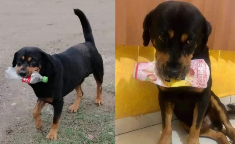 Cuache, um cachorro prestes a morrer, dá lixo aos seus salvadores como forma de agradecimento