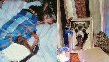 Joselito, o cachorro que sofreu abusos durante anos, morreu mais feliz do que nunca