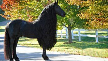 Seu nome é Frederik, o Grande e ele é o cavalo mais bonito do mundo