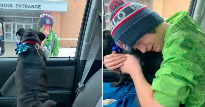 Família surpreende menino na escola com seu cachorro que havia se perdido