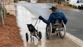 Cachorro com deficiência que foi devolvido quatro vezes é adotado por um homem que o entende
