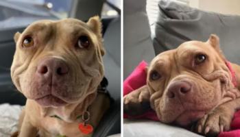 Resgatada das ruas, essa cadela sorridente é agora a cachorrinha mais feliz do mundo