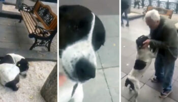 Vovô encontra seu cachorro na rua três anos depois de perdê-lo