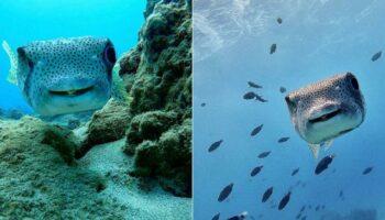 Mergulhadora encontra peixe com o sorriso mais fofo e o visita todos os dias