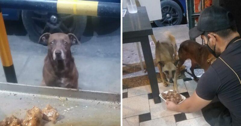 Dono de restaurante prepara uma refeição grátis para cada cão de rua que o visita