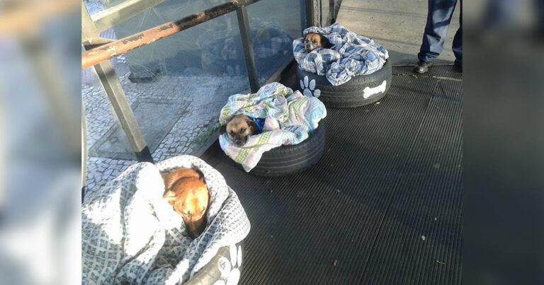 Esta estação de ônibus ajuda cães de rua fugir do frio