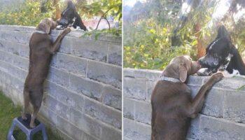 Cachorro ganha banquinho para poder ver os cães vizinhos
