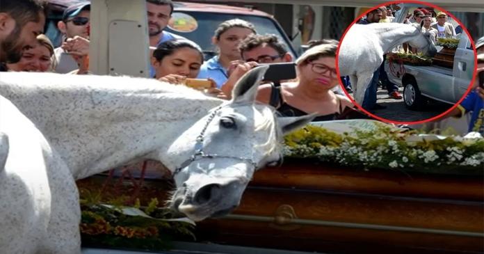 VÍDEO: Cavalo é levado ao funeral de seu dono e não quis se separar do caixão