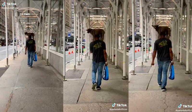 (VÍDEO) Jovem flagra homem carregando seu cachorro nos ombros na rua