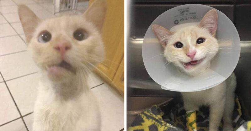 Gatinha resgatada com mandíbula fraturada ganha um lindo sorriso para sempre