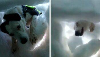 Homem enterrado na neve se filma enquanto um cão de resgate o salva, e ele é encantador