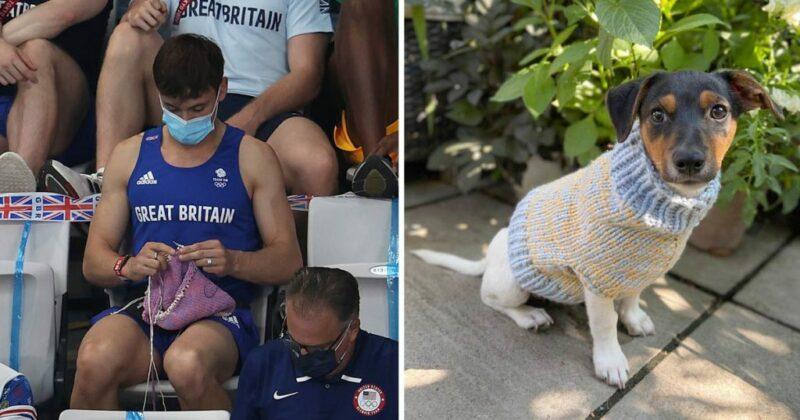 Campeão olímpico é flagrado tricotando roupinha para cachorro durante a final olímpica