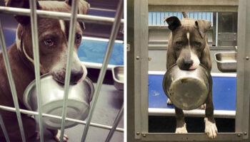 Cachorro de abrigo se recusa a ser adotado sem sua tigela de comida