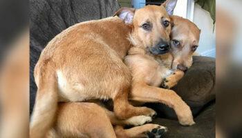 Cachorro resgatado encontra seu irmão 'gêmeo' na rua e convence sua mãe humana a levá-lo para casa