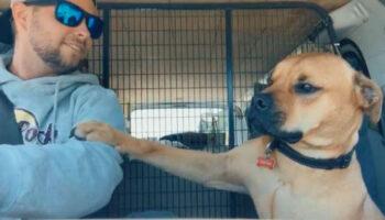 Este cachorro resgatado se recusa a soltar a mão de seu novo pai