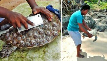 Jovem retira crustáceos presos a tartarugas e salva suas vidas (VÍDEO)