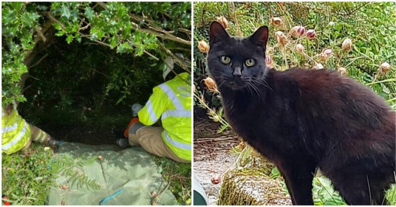 Com seus miados, gato ajuda a polícia a encontrar sua dona desaparecida de 83 anos que caiu na ravina