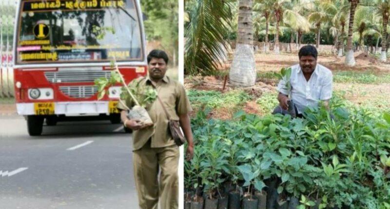 Motorista de ônibus plantou mais de 180 mil árvores por mais de 30 anos