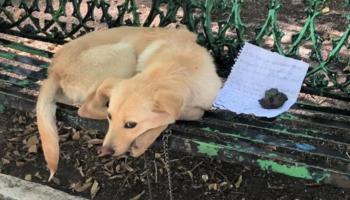 Cachorro é abandonado com um bilhete ao lado porque sofria abusos em casa
