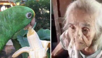 VÍDEO: Vovó de 102 anos pede a volta de seu papagaio apreendido pela Polícia