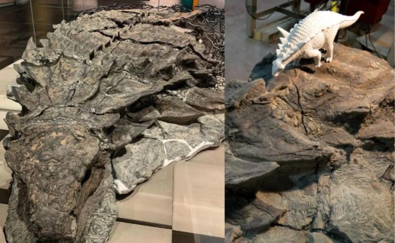 Foi assim que encontraram esta 'múmia' de dinossauro de 110 milhões de anos no Canadá