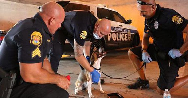 Policiais quebram o vidro de um carro e salvam cachorrinho preso que pede ajuda