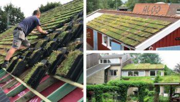 Jovens fabricam telhas verdes que purificam o ar e se adaptam a qualquer telhado